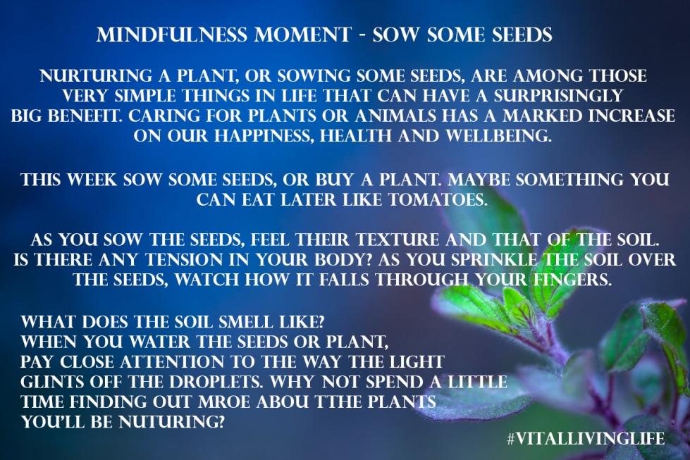 mindfulmomentsseeds